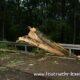 Baum auf Straße 22.08.2020